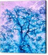 Turquoise Oak Tree Acrylic Print by Priya Ghose