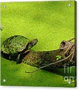 Turtle-190 Acrylic Print