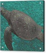 Turtle Ascending Acrylic Print