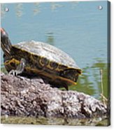 Turtle At The Lake Acrylic Print