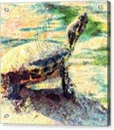 Turtle Brave Acrylic Print