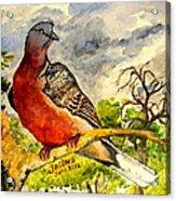 Turtle - Dove Acrylic Print