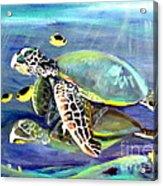 Turtle Duo Acrylic Print