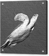 Turtle Gaffiti Acrylic Print