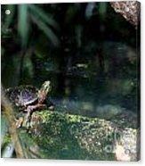 Turtle Grotto Acrylic Print
