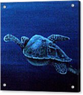 Turtle In The Red Sea Acrylic Print