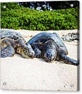 Turtle Lovin Acrylic Print
