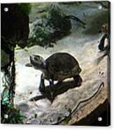 Turtle - National Aquarium In Baltimore Md - 121218 Acrylic Print