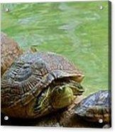 Turtle Ninjas Acrylic Print