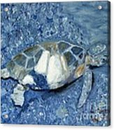 Turtle On Black Sand Beach Acrylic Print