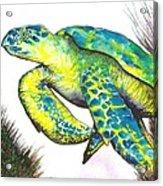 Turtle Wonder Acrylic Print