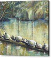 Turtles On A Log Acrylic Print