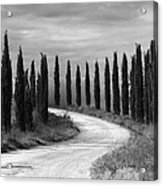 Tuscan Cedars Acrylic Print