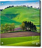 Tuscan Palouse Acrylic Print