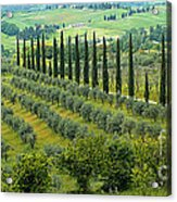 Tuscan Panoramic 3 Acrylic Print