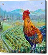 Tuscan Rooster Acrylic Print