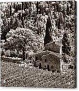 Tuscan Vinyard Acrylic Print