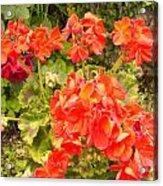 Tuscany Flower Garden Acrylic Print