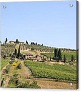 Tuscany Vineyard Acrylic Print