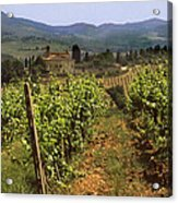 Tuscany Vineyard No.2 Acrylic Print
