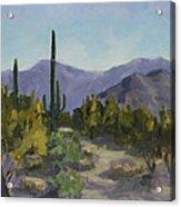 The Serene Desert Acrylic Print