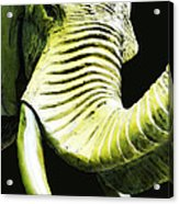 Tusk 1 - Dramatic Elephant Head Shot Art Acrylic Print by Sharon Cummings