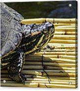 Tutle On Raft Acrylic Print