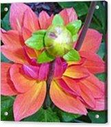 Tutu Dancer Flower Acrylic Print