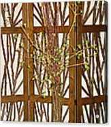Twigs On Twigs Acrylic Print