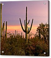 Twilight After Sunset In The Cactus Forests Of Saguaro National Park Acrylic Print