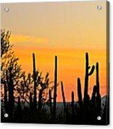 Twilight After Sunset Sonoran Desert Acrylic Print