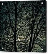 Twilight Colors  Acrylic Print