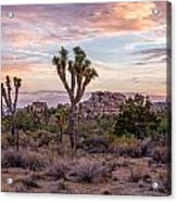 Twilight Comes To Joshua Tree Acrylic Print