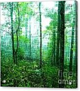 Twilight Forest Acrylic Print by Lorraine Heath