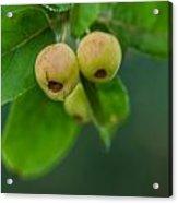 Twin Berries Acrylic Print