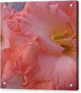 Twin Gladiola Blooms Acrylic Print