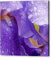 Twin Iris Acrylic Print
