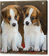 Twin Puppies Portrait Acrylic Print by R christopher Vest