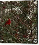 Twinkle Twinkle Little Bird Acrylic Print by Sharon Costa