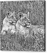 Twins V2 Acrylic Print