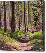 Twisp River Trail Acrylic Print