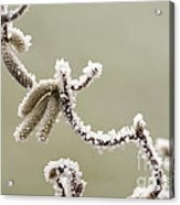 Twisted Frost Acrylic Print by Anne Gilbert