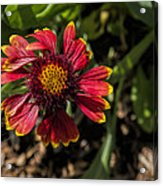 Twisted Petals Acrylic Print