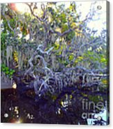 Twisted Tree Acrylic Print by Carey Chen