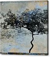 Twisted Tree Acrylic Print