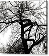 Twisted Tree In Black And White Acrylic Print