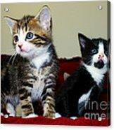 Two Adorable Kittens Acrylic Print