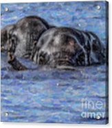 Two African Elephants Swimming In The Chobe River Acrylic Print