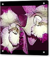 Two Baby Orchids Acrylic Print