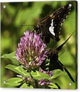 Two Beautiful Butterflies Acrylic Print